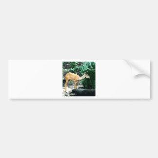 Bongo from Safari Bumper Sticker