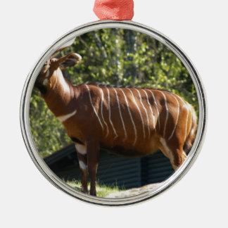 Bongo Metal Ornament