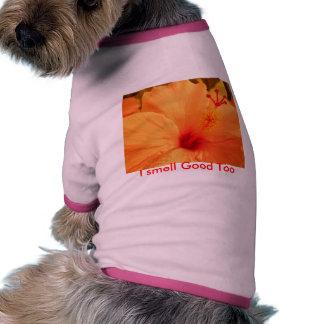 Bonito de Orang I Camisa De Perro