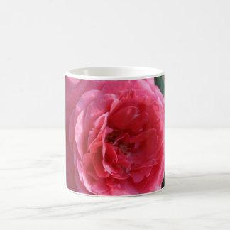 Bonito en la taza color de rosa rosada III