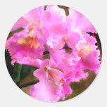 Bonito en las orquídeas rosadas de Cattleya Pegatinas Redondas