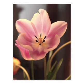 Bonito en postal púrpura del tulipán
