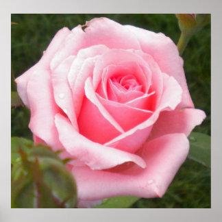 Bonito en poster color de rosa rosado