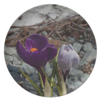 Bonito en púrpura plato