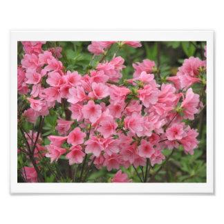Bonito en rosa fotografía