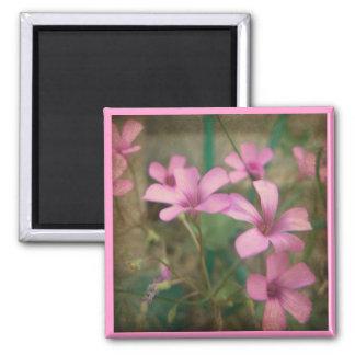 Bonito en rosa imán cuadrado