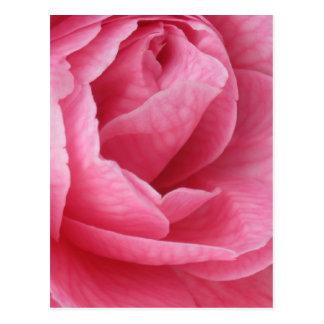 Bonito en rosa postal