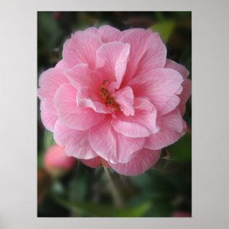 Bonito en rosa póster