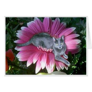 Bonito en rosa tarjetas