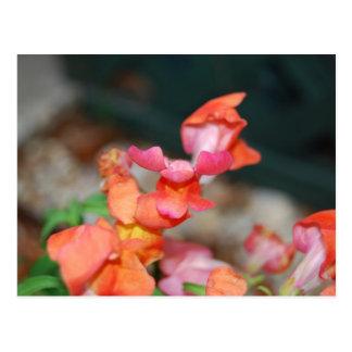 Bonito en rosas y naranjas postales