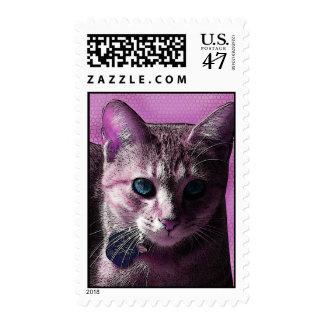 Bonito en sello de ojos azules rosado del gato del