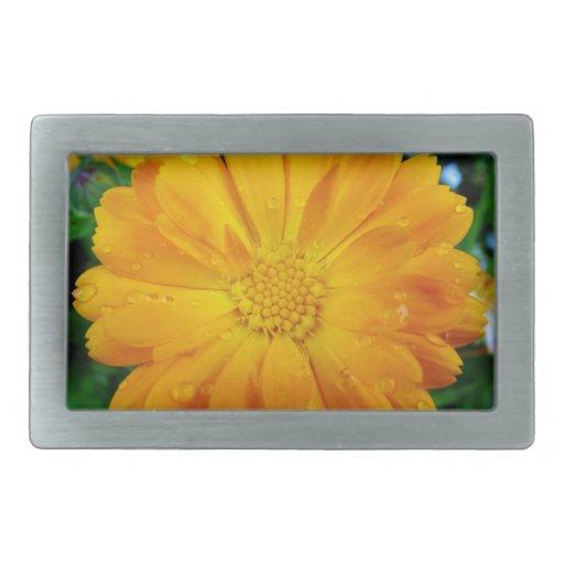 bonito, flor amarilla fresca de la margarita hebillas cinturon rectangulares