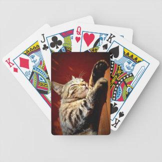 Bonito gato atigrado barajas de cartas