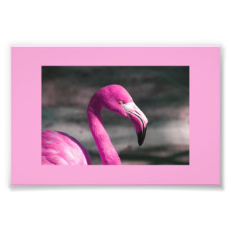 Bonito rosado de Posin del flamenco Fotografía