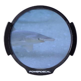 Bonnethead Shark LED Window Decal