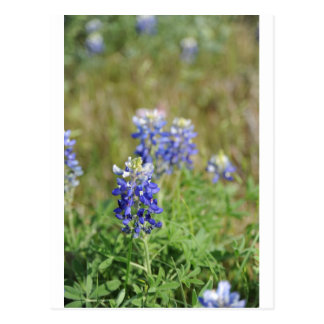 Bonnett azul postal