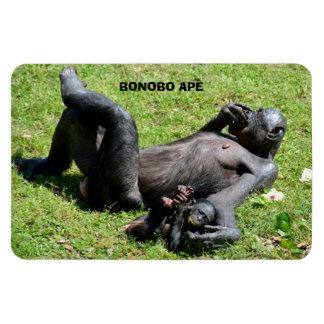 Bonobo Ape Magnet