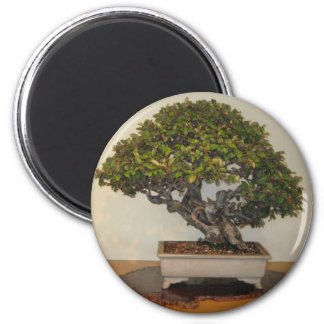 Bonsai at National Arboretum, Washington D.C. 2 Inch Round Magnet