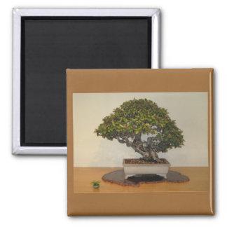 Bonsai at National Arboretum, Washington D.C. 2 Inch Square Magnet