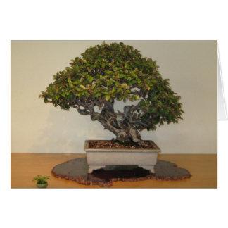 Bonsai at National Arboretum, Washington D.C. Card