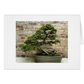 Bonsai at Phipps Conservatory Stationery Note Card