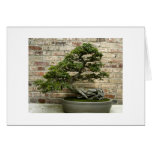 Bonsai at Phipps Conservatory Greeting Card