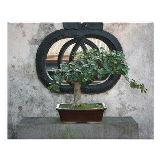 Bonsai at The Lin Family Mansion and Garden,Taipei Photo Print