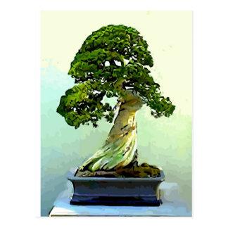 Bonsai Cypress Tree Postcard