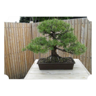 "Bonsai Mugo Pine Wedding Invitations 5"" X 7"" Invitation Card"