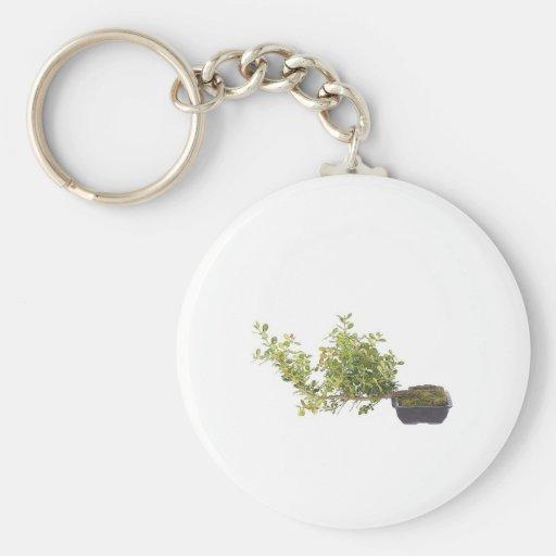 Bonsai Photo 10 Key Chains