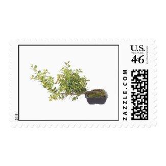 Bonsai Photo 10 stamp