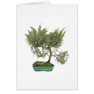 Bonsai Photo 5 Card