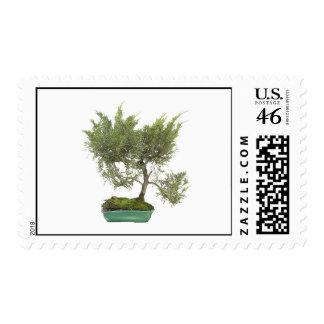 Bonsai Photo 5 Postage Stamp