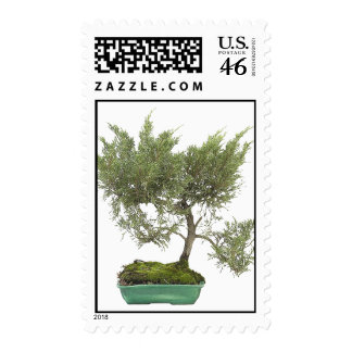 Bonsai Photo 5 Stamps
