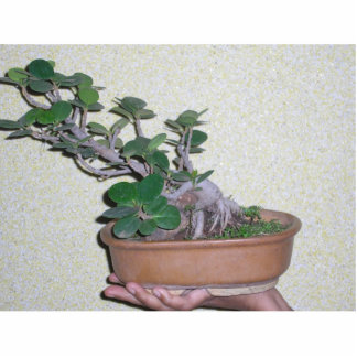 bonsai photo sculpture