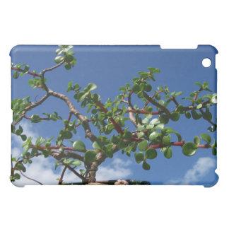 Bonsai portulacaria afra tree 1 iPad mini covers