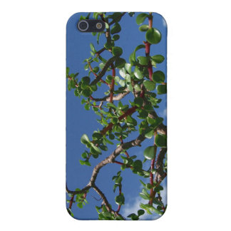Bonsai portulacaria afra tree 1 iPhone 5 cases