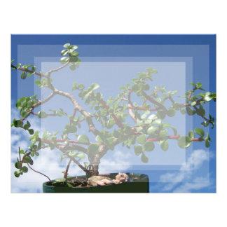 Bonsai portulacaria afra tree 1 letterhead