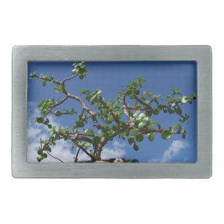 Bonsai portulacaria afra tree 1 rectangular belt buckle