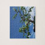Bonsai portulacaria afra tree 2 jigsaw puzzles