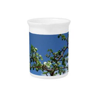 Bonsai portulacaria afra tree 2 pitcher