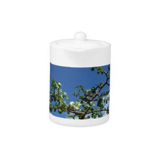 Bonsai portulacaria afra tree 2 teapot