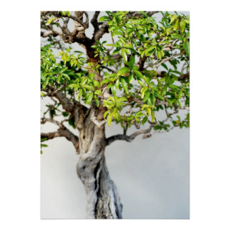 Bonsai Posters | Zazzle
