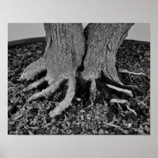Bonsai Roots - Poster