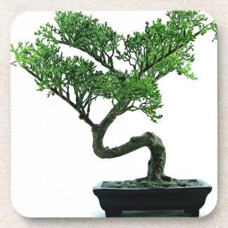 Bonsai Tree Drink Coaster