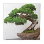 Bonsai tree- natural tile