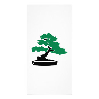 Bonsai tree photo cards