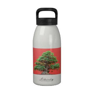 Bonsais del Ficus Botella De Agua
