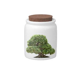 Bonsais del Ficus aislados Plato Para Caramelo