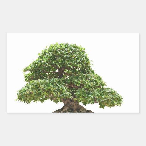 Bonsais del Ficus aislados Pegatina